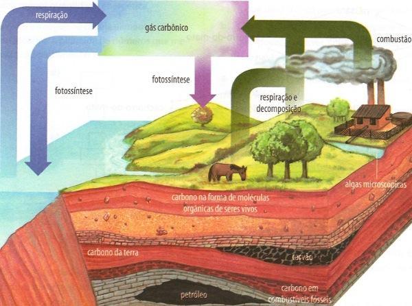 Esquema representando o ciclo do carbono