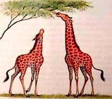 Evolução das espécies segundo Lamarck, girafas.