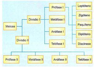 Esquema geral da meiose