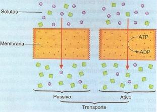 O transporte na membrana plasmática