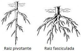 Tipos de raízes