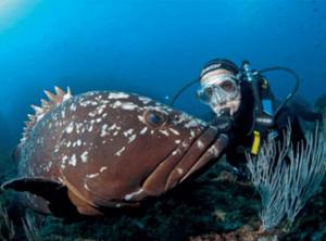 Oceanógrafo