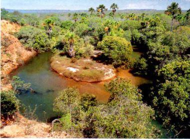 Mata de galeria às margens do Rio Parnaíba.