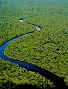 Floresta Amazônica e um rio cortando a mata verde.