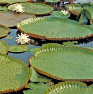 Plantas da Floresta Amazônica