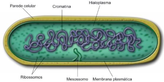 Imagem de uma célula procariótica
