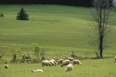 pecuária na região sul