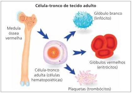 Células-tronco de tecidos adultos.