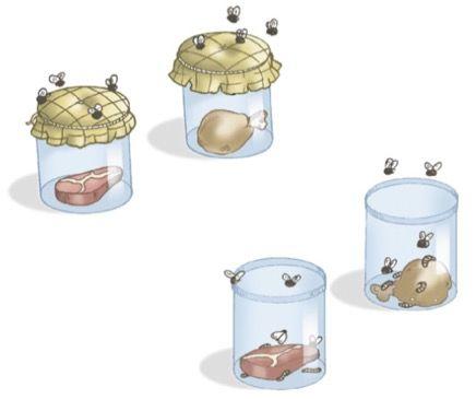 Experimento de Redi mostrando que as moscas não surgem por geração espontânea.