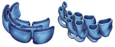 Organelas retículo endoplasmático.