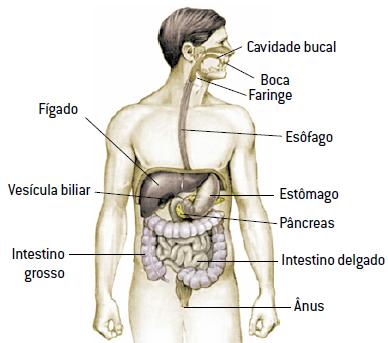 As partes do sistema digestório do homem.