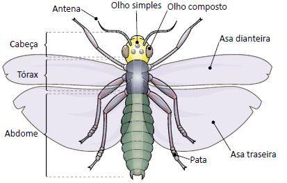 Estrutura de um inseto.