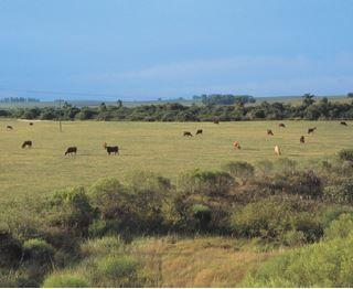 Área de pasto nos pampas.