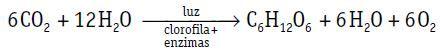 Equação da fotossíntese.