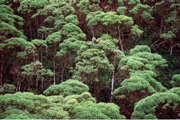 Floresta equatorial na ilha de Santa Cruz.