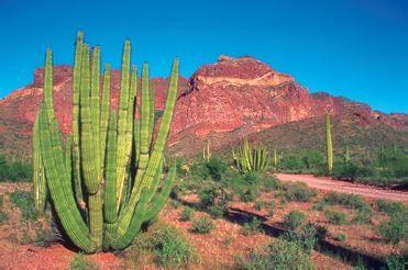Exemplo de deserto.