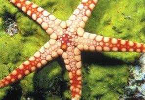 Foto de uma estrela-do-mar.