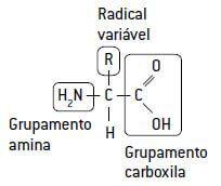 Formação de uma proteína.