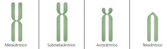 Classificação dos cromossomos.