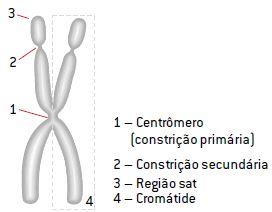 Estrutura de um cromossomo