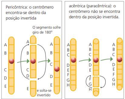 Mutação cromossômica estrutural por inversão.