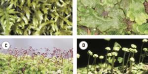 Briófitas e Pteridófitas