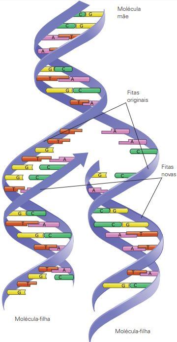 Imagem representando a duplicação do DNA.