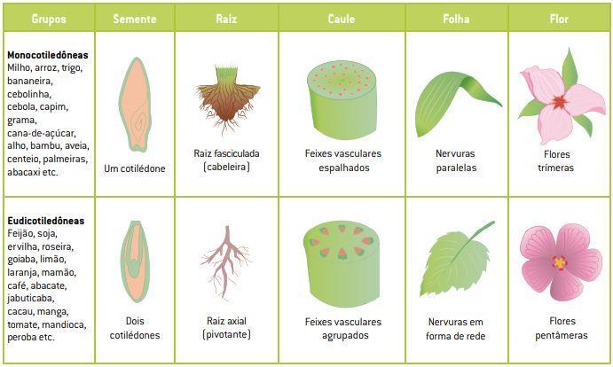 Classificação das angiospermas.