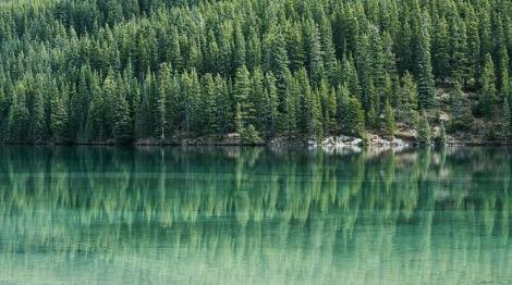 Vários pinheiros ao fundo de um lago.