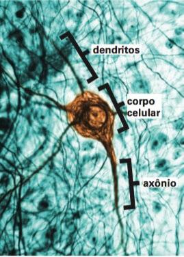 Imagem de um neurônio.