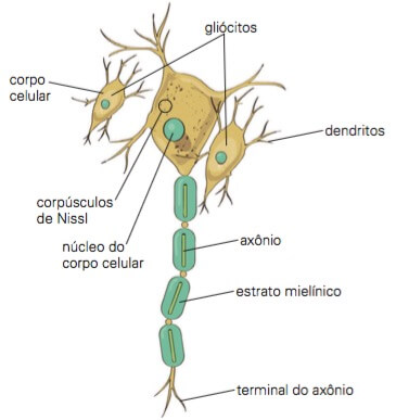 Partes de um neurônio.