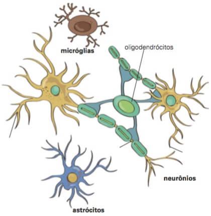 Tipos de gliócitos.