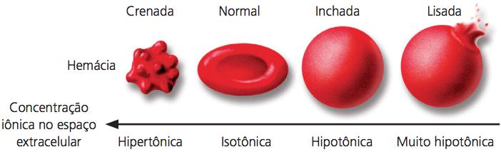 Exemplo da osmose com hemácias.