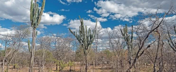 Vegetação da caatinga.