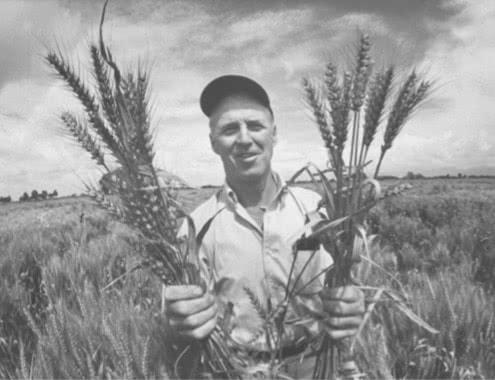 Retrato de Norman Borlaug