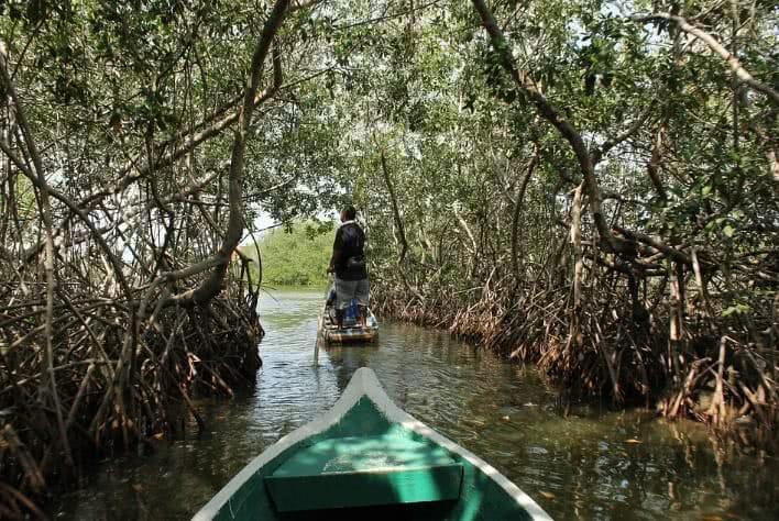 Barco passando em um pequeno rio entre o manguezal.