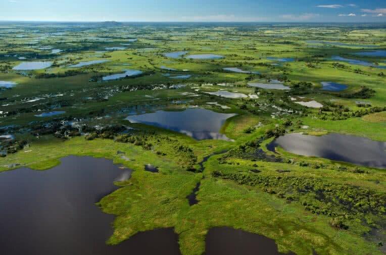 Bioma do pantanal.