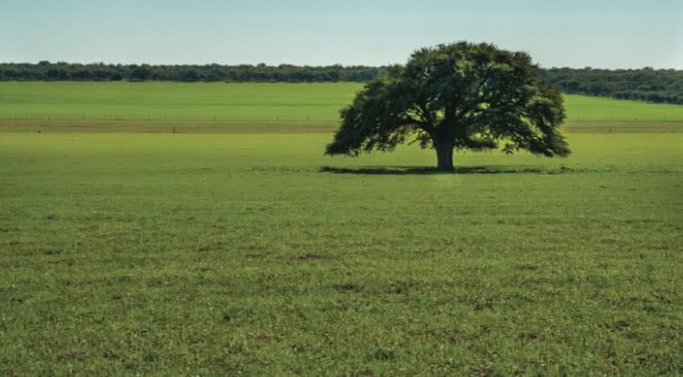 Bioma dos pampas.