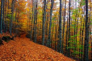 Bosque de Faias