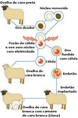 Clonagem Animal