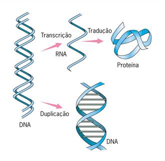 Duplicação do DNA