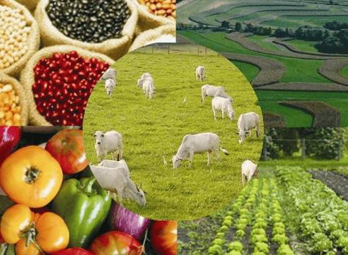 Pecuária e Agropecuária no Brasil