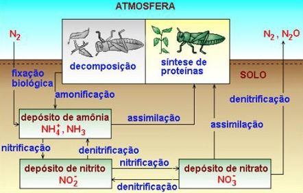 Como ocorre o Ciclo do Nitrogênio