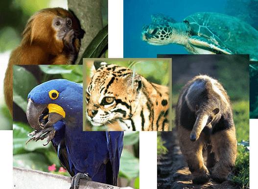 Resultado de imagem para Extinção de espécies