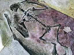 Pterossauro encontrado no Brasil