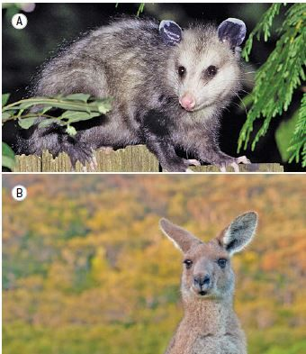 Animais mamíferos.