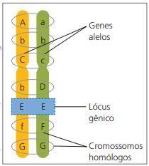 Conceitos de genética.
