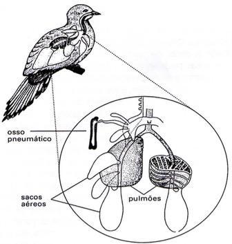 Trocas gasosas das aves