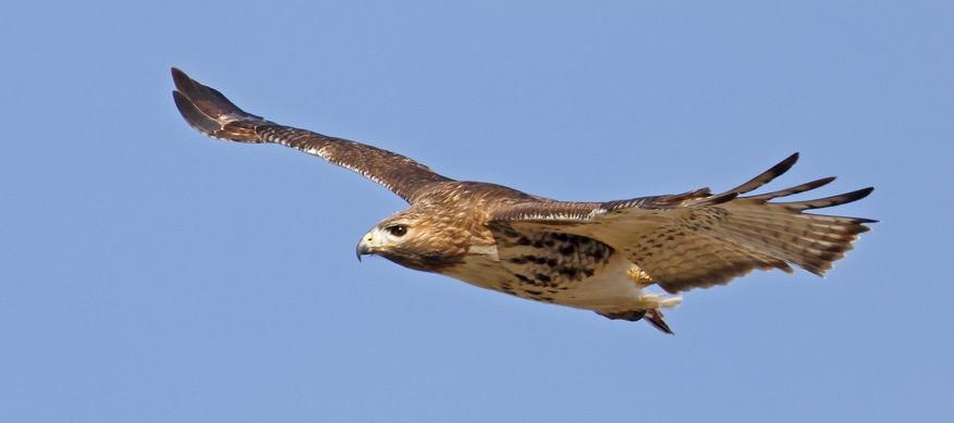 O voo de uma ave