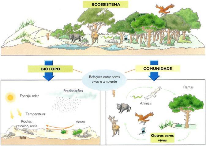Ecossistema, biótopo e comunidade
